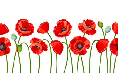 Vector horizontal seamless background with red poppies on a white background.