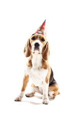 Pretty puppy is celebrating his birthday