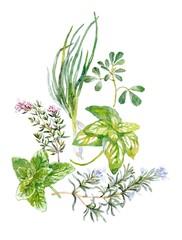 итальянские травы и масло акварелью