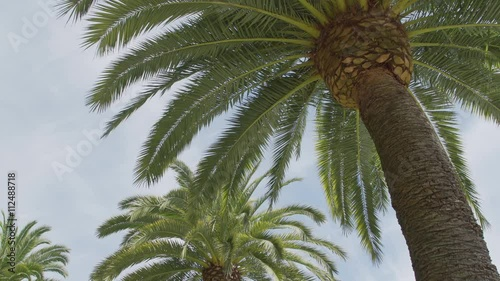 Low angle view of palm fronds