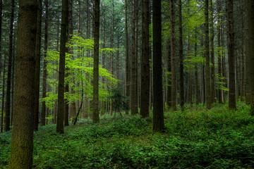 un arbre sous la lumière dans une forêt