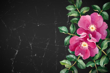 Watercolor illustration of a wild rose flower