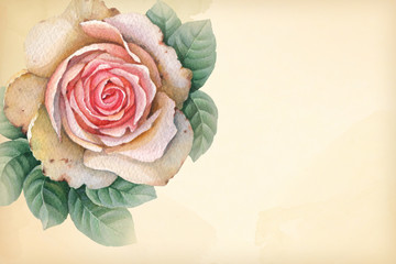Watercolor illustration of rose flowers.
