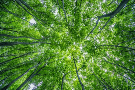 Summer Forest Canopy