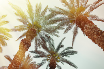 Palm tree background with retro filter effect