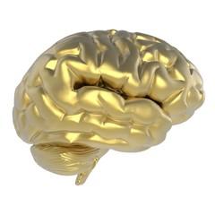 Human brain. 3D illustration. 3D CG.