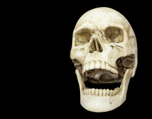 openning mouth human skull isolated on black background with copy space, clipping path