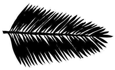 Vector illustration. Silhouettes of palm leaf on a white background.