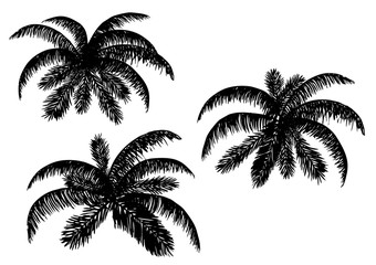 Vector illustration. Silhouettes of palm leaves on a white background.
