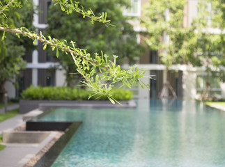 Luxury Outdoor Swimming Pool, select focus leaves