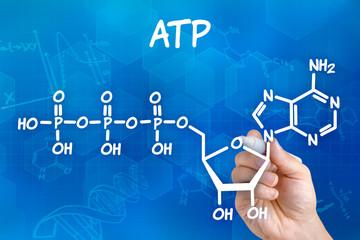 Hand mit Stift zeichnet chemische Strukturformel von ATP