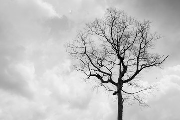 Trees with rain clouds, abstract black and white background