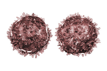 B- and T-lymphocytes. Immune cells isolated on white background. 3D illustration