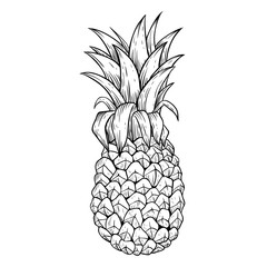 Black and White Pineapple With Line Art or Sketchy Style