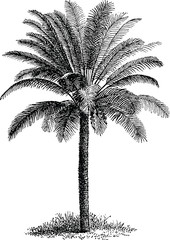 Vintage image palm tree