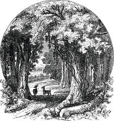 Vintage image oak trees