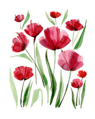 Decorative poppy flowers. Watercolor illustration.