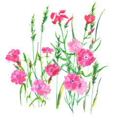 set with red and pink flowers and grass on a white background, watercolor painting