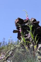 Flores silvestres, Sauceda, Hurdes, España