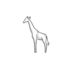 Giraffe sketch icon.