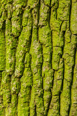 natural tree bark background texture