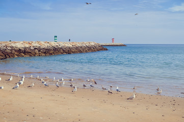 Seascape with seagulls fly over the ocean background