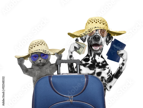 Cat and dog are going on a trip to travel