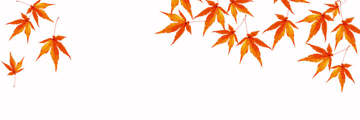 秋 もみじのバナー素材