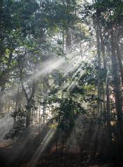 morning sunlight through fog in the woods