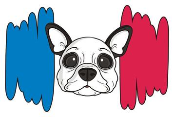 flag, dog, french, bulldog, breed, background, white, isolated, cartoon, puppy,  animal, muzzle, snout