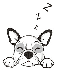 sleep, lie, dream, z, symbol, sings, letter, letter z, closed, eyes, dog, french, bulldog, breed, background, white, isolated, cartoon, puppy,  animal, muzzle, snout, paws