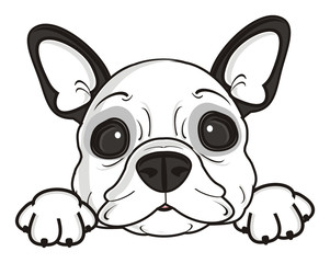 dog, french, bulldog, breed, background, white, isolated, cartoon, puppy,  animal, muzzle, snout, paws