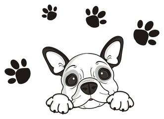 tracks, trail, leave, imprint, dog, french, bulldog, breed, background, white, isolated, cartoon, puppy,  animal, muzzle, snout, paws