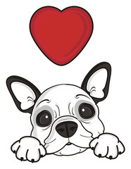 love, red, heart, recognition, holiday, Valentine's Day, dog, french, bulldog, breed, background, white, isolated, cartoon, puppy, muzzle, snout, paws