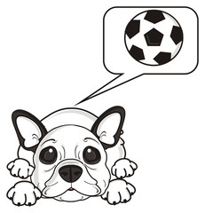 sport, soccer, football, ball, game, play, sign, symbol, callout, note,  thinking, thoughts, desires, lie, dog, french, bulldog, breed, background, white, isolated, cartoon,