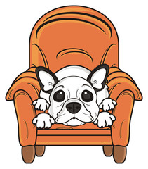 look, lie, chair, soft, climb, take, dog, french, bulldog, breed, background, white, isolated, cartoon,