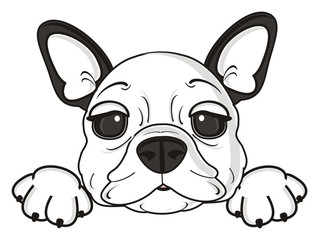 dog, french, bulldog, breed, background, white, isolated, cartoon, puppy, muzzle, snout, paws