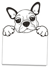 hold, look out, stick, shape, posture, empty, clean, paper, sheet, banner, poster, dog, french, bulldog, breed, background, white, isolated, cartoon, puppy, muzzle, snout