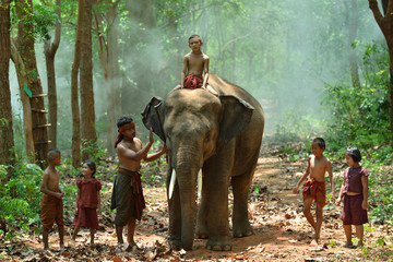The Big Family of Elephants Village at Surin Province Thailand