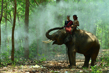 Young man and pretty girl riding on the back of an elephant.
