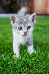 Cat stands in grass