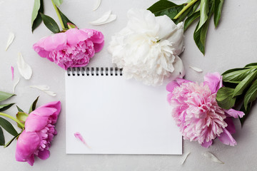 Beautiful pink and white peony flowers with empty notebook on gray stone background, copy space for your text or design, top view, flat lay