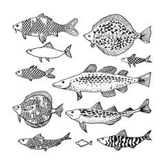 Decorative ocean fish set.