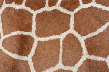 Animal background texture of a giraffe spots pattern