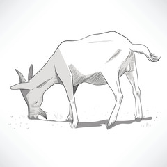 Hand drawn black and white lineart illustration of a goat grazing