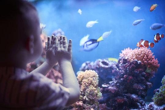 Little boy in the aquarium