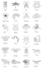 Collection with various hand drawn insects on white