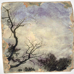 Vintage bare tree on sky in evening with borders