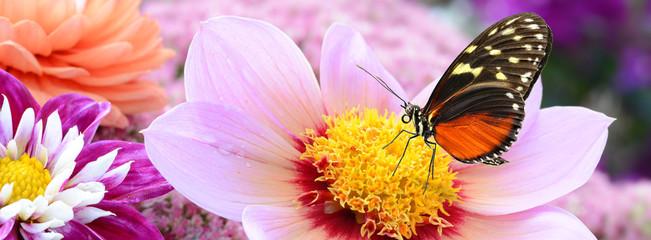 Schmetterling 210