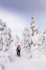 Skiers walking on snow covered mountain ranges, Ural, Russia